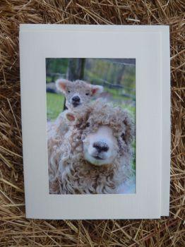 Sheep 20