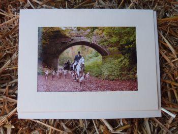 Horses & Donkeys 14