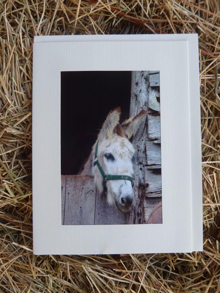 Horses & Donkeys
