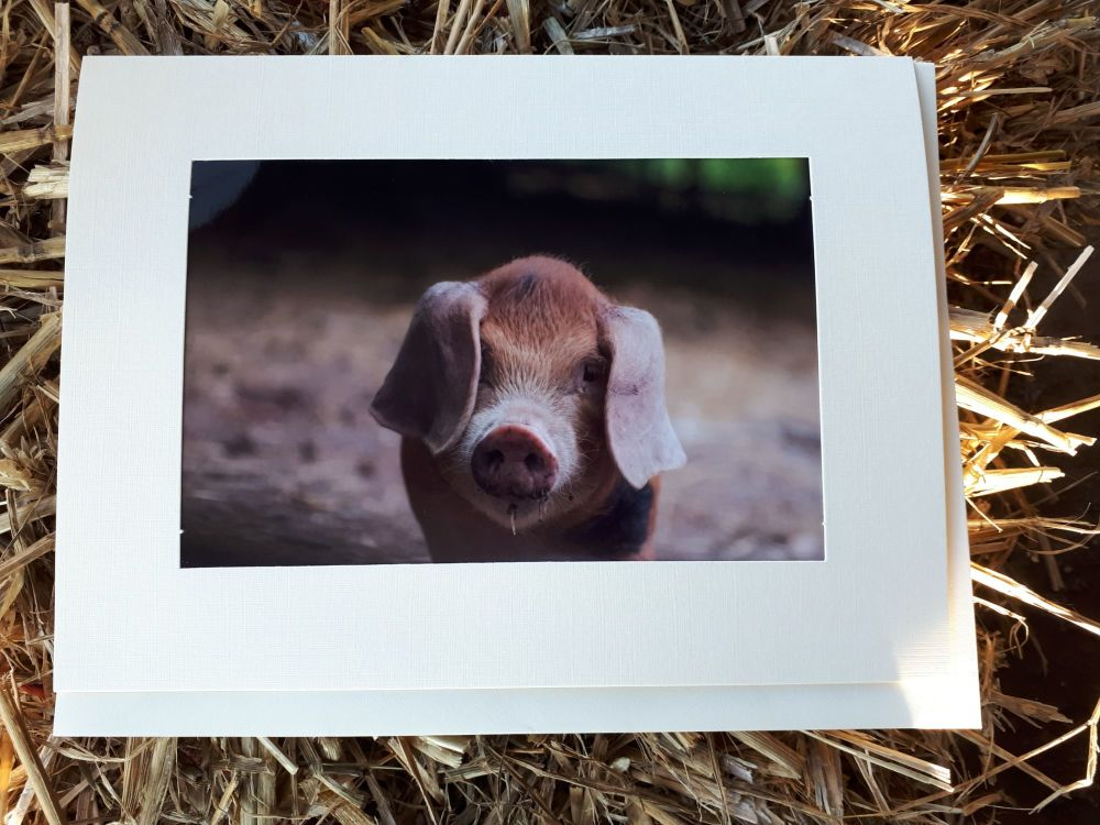 Oxford Sandy & Black Piglet