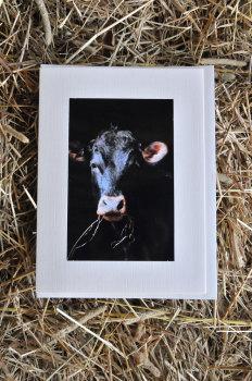 Cows 14