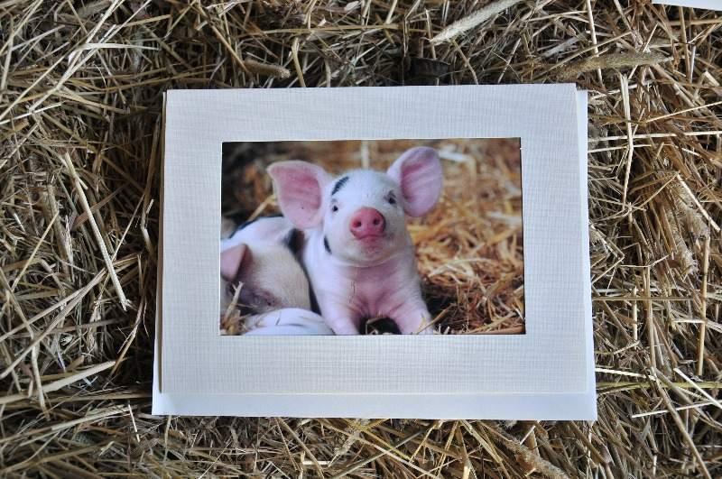 Gloucester Old Spot Piglet Greeting Card