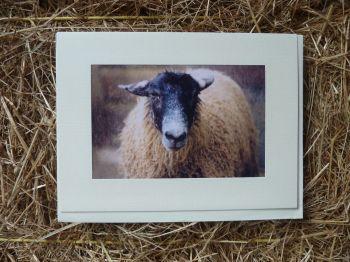 Sheep 10