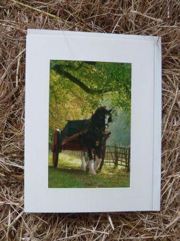 Horses & Donkeys 1