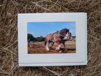 Horses & Donkeys 2