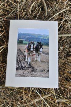 Horses & Donkeys 3