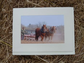 Horses & Donkeys 4