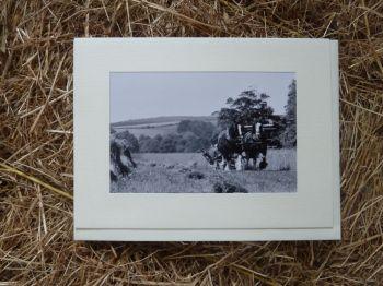 Horses & Donkeys 5
