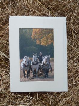 Horses & Donkeys 7