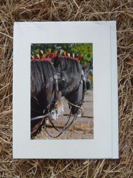 Horses & Donkeys 8