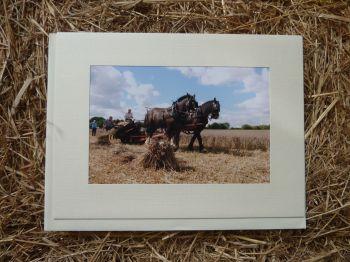 Horses & Donkeys 9