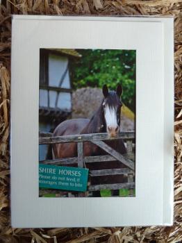 Horses & Donkeys 11