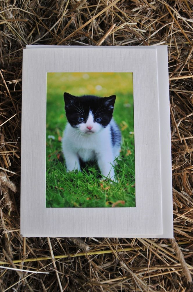 Cats Card 1