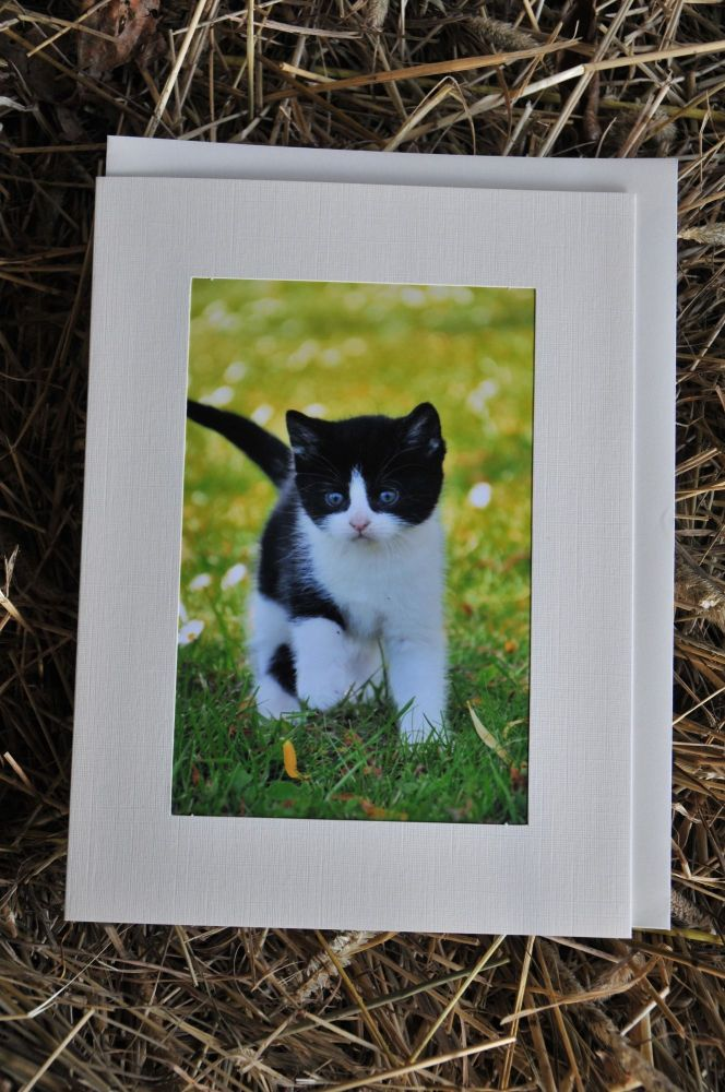 Cats Card 3