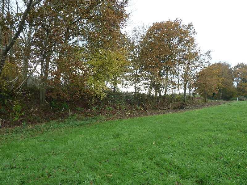 Kilsham Clearing 5