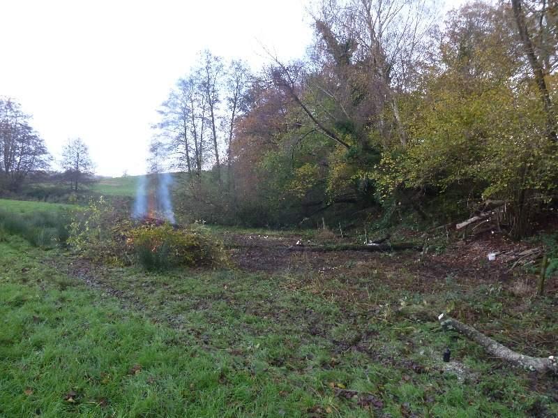 Kilsham Clearing 6