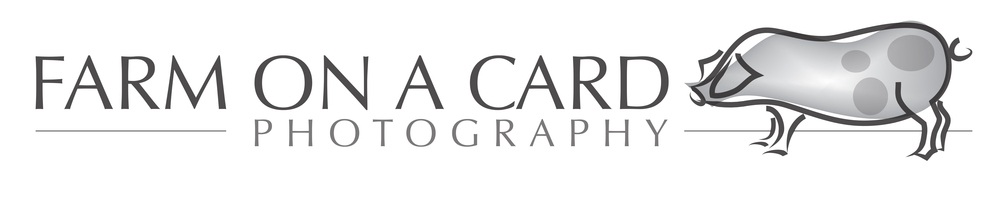 farmonacard-photoraphy.com, site logo.