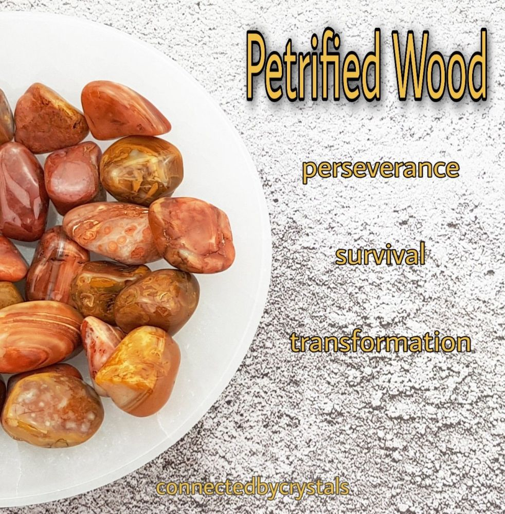 Petrified Wood - Patience