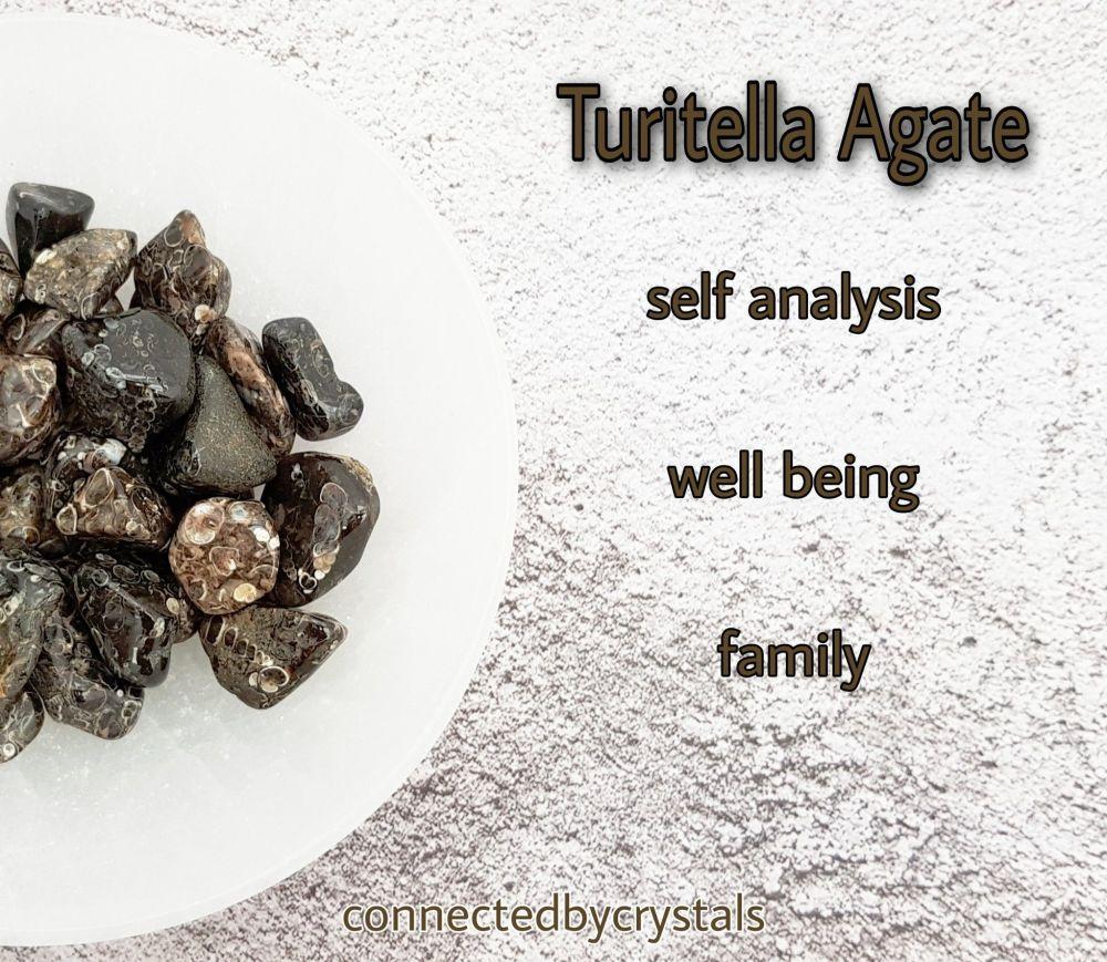 Turritella Agate - survival Stone