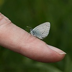 small blue on finger for blog