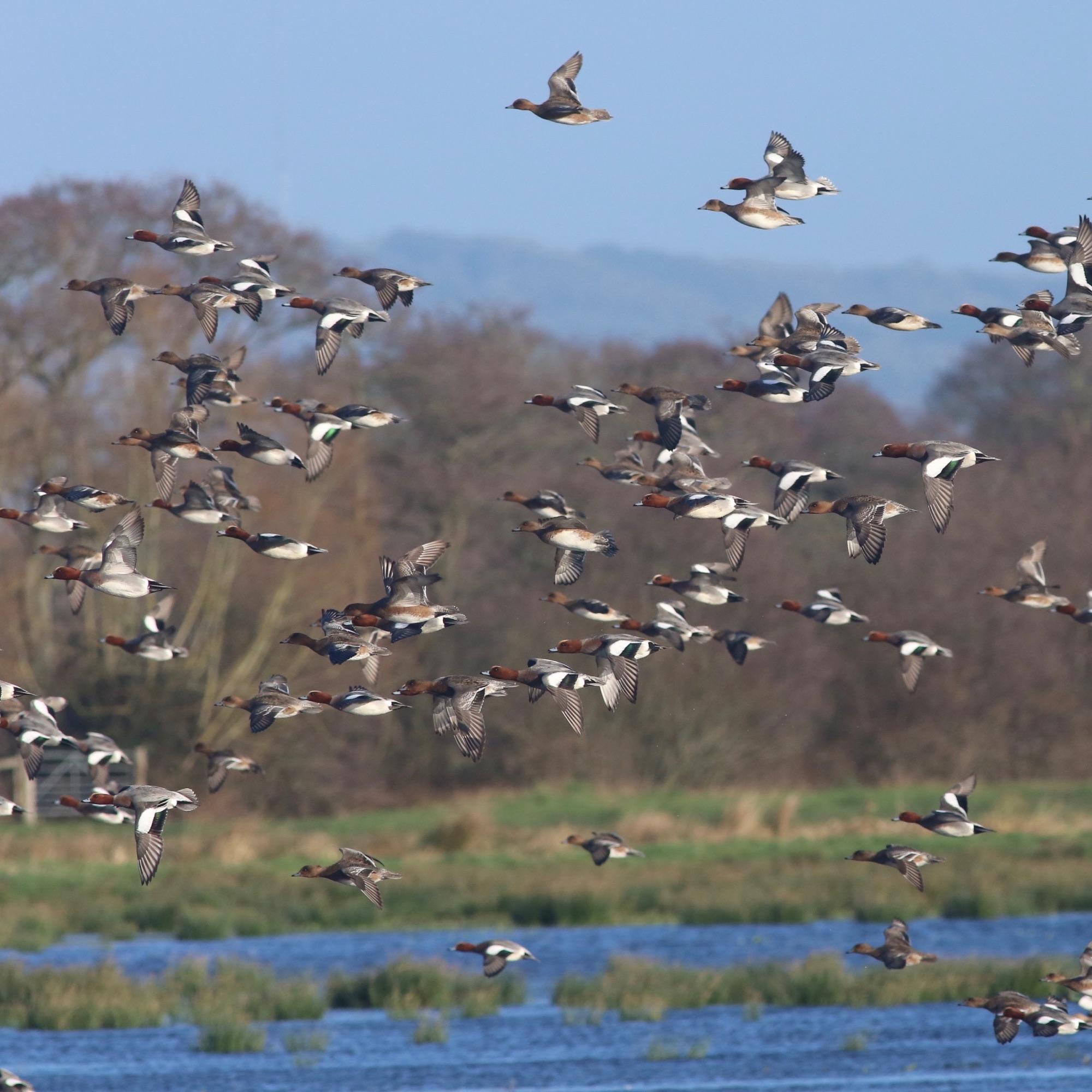 view from Catcott hide Jan 19