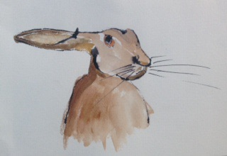 Hare Sketch by me