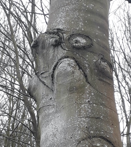 face in tree Hill Lane