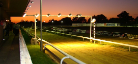 harlow greyhound racing