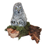great grey owl & owlets