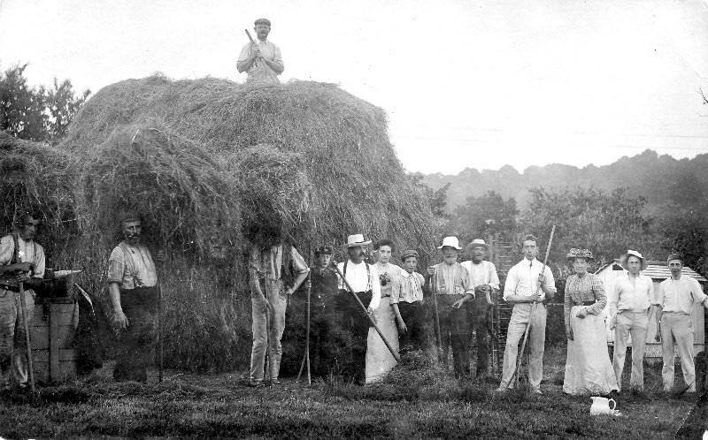 the landlord and his family from the bell help with haymaking at vinehall f