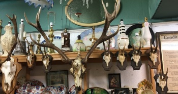 A fine selection of antlers .