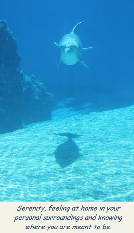 photo-dophin