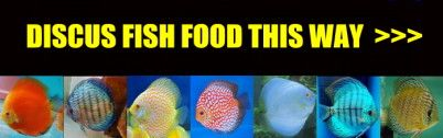 DISCUS FISH MUSSEL MIX FOR SALE