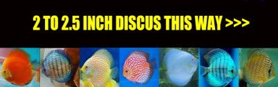 2 INCH DISCUS FOR SALE