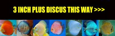 3 INCH DISCUS FOR SALE