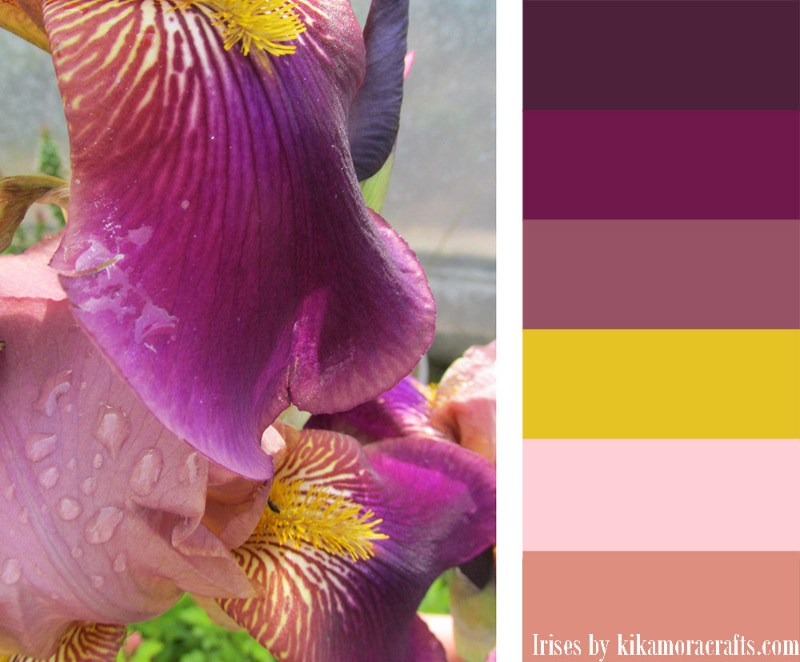 irises-color-palette