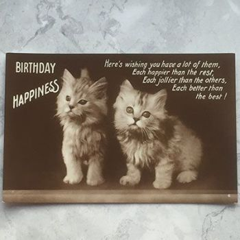 Birthday Happiness - Two Cats