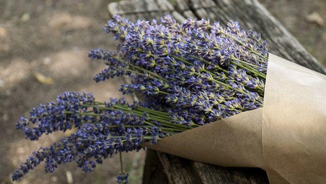 lavender-247676_640