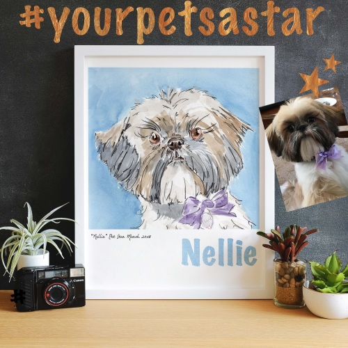 Your Pets A STAR