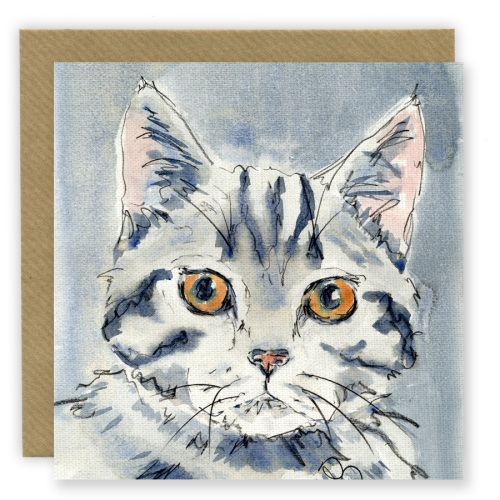 PP26 Grey Tabby cat