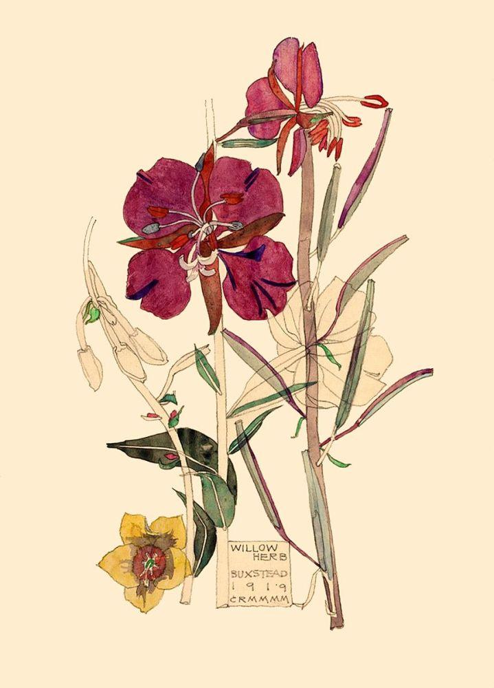 Charles Rennie Mackintosh: Willow Herb, Buxstead, 1919