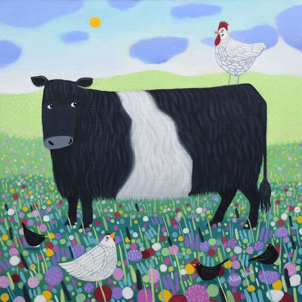 How High Belted Galloway