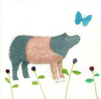 Watercolour drawing of a Saddleback Pig