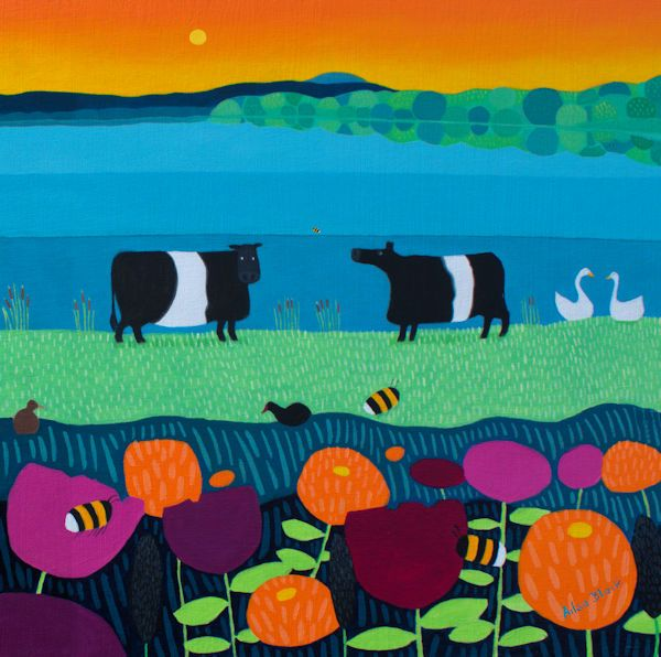 Belted Galloway Cows in front of a colourful sunrise