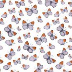 """Orange Delights"" orangetip butterflies repeat pattern on milk"