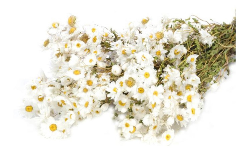 Dried Rodanthe bunch natural and everlasting