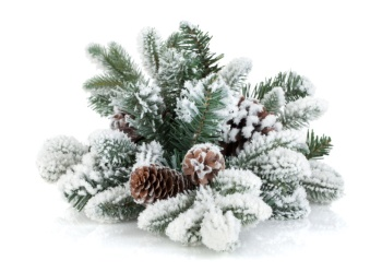Frosted Pinecones 50ml (BN 318143)
