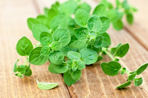 Oregano 50ml