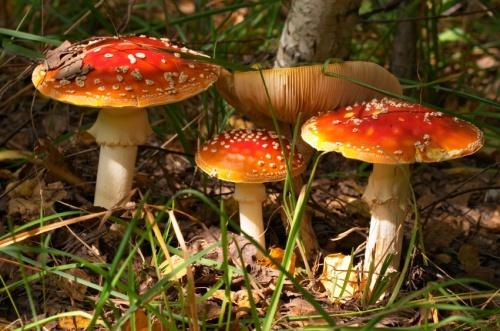 Magic Mushroom 50ml