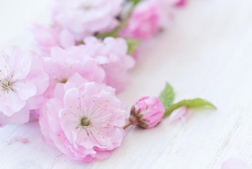 Almond Blossom 50ml